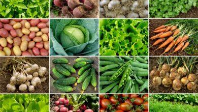 Photo of Cultivo de hortalizas en el país, seis de los mejores
